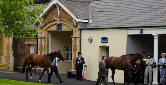 horses at Ascot