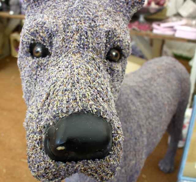 Lavendar dog head