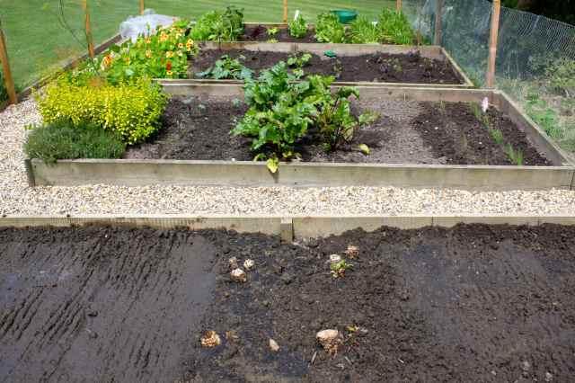 veg beds 29-6-14