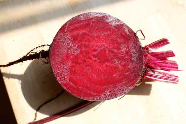 beetroot from garden