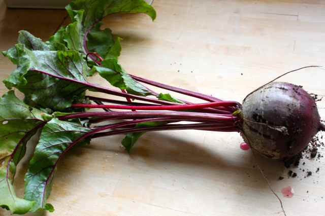 beetroot just picked