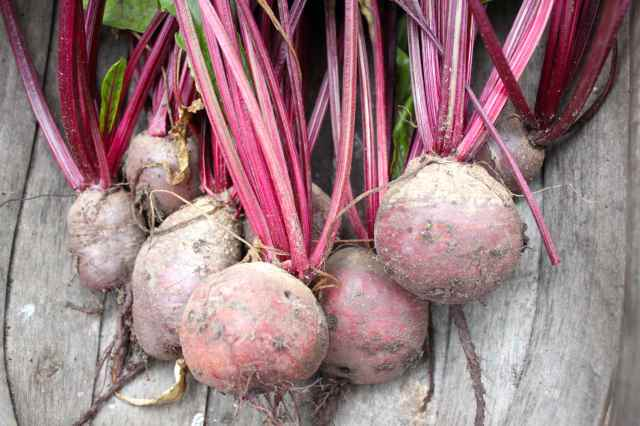 beetroots in trug