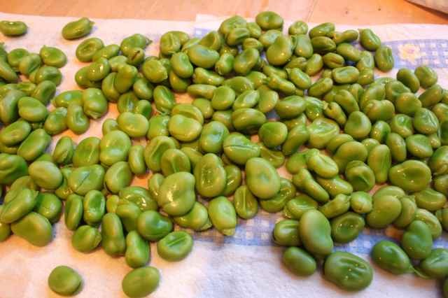 blanched broad beans