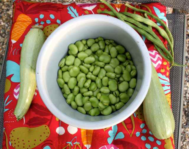 broad beans, beans and courgette