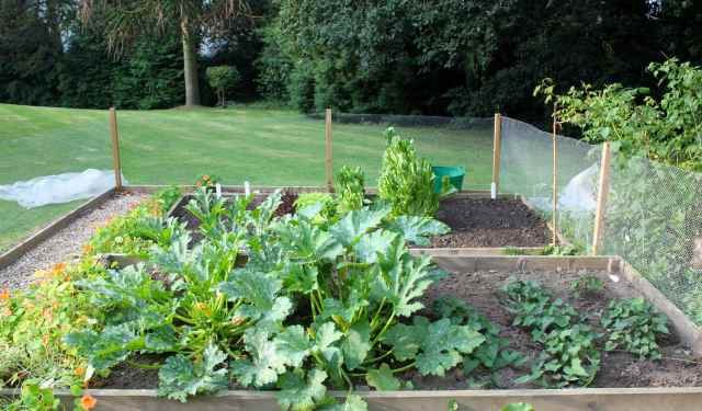courgettes and sweet pots