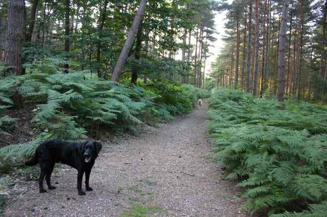 dog walk 15-7-14