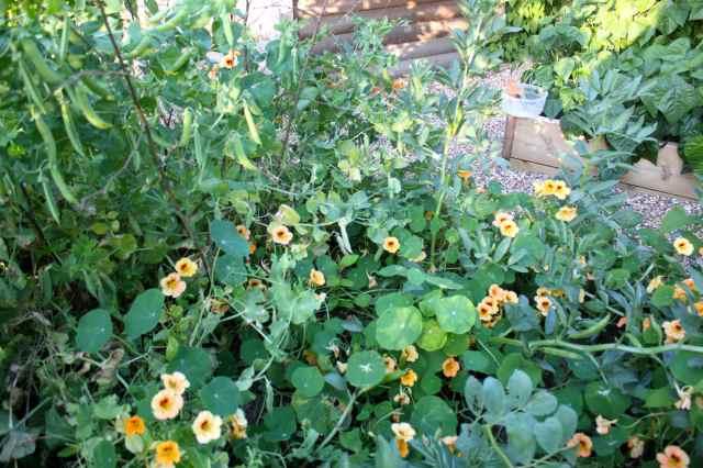 garden 15-7 1