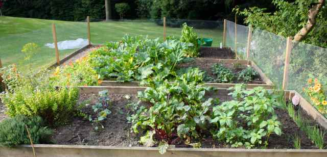 herbs and beetroot