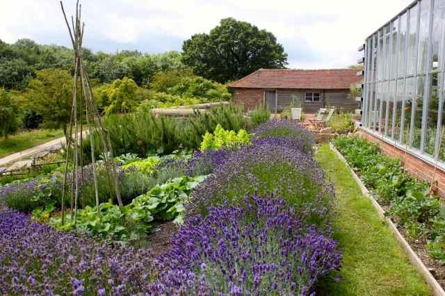 Perch Hill lavendar