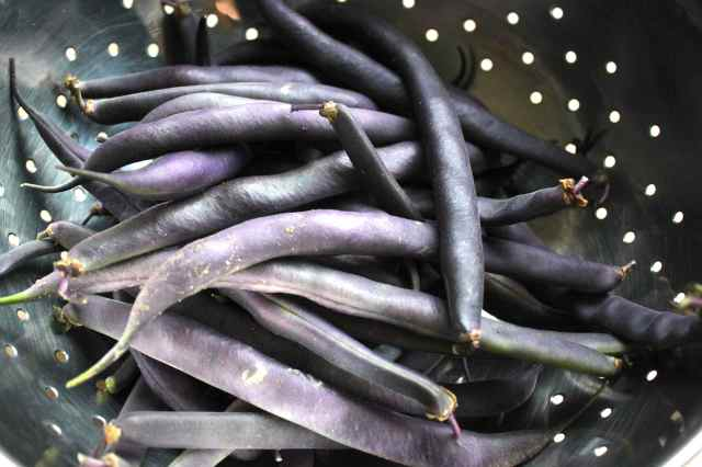purple beans in colander