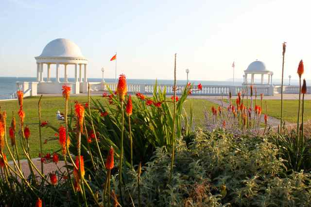 red hot pokers and sea