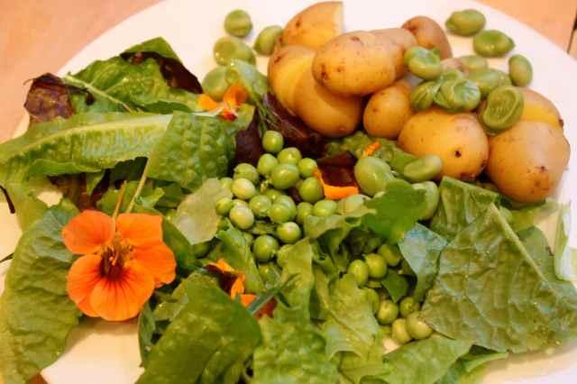 salad Sunday