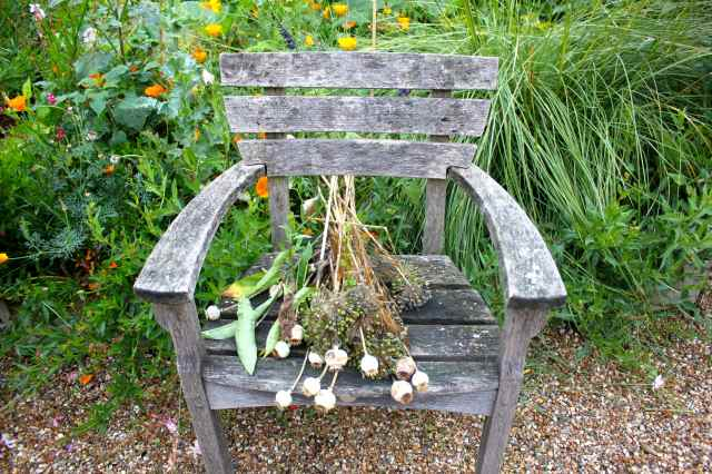 seed heads on chair