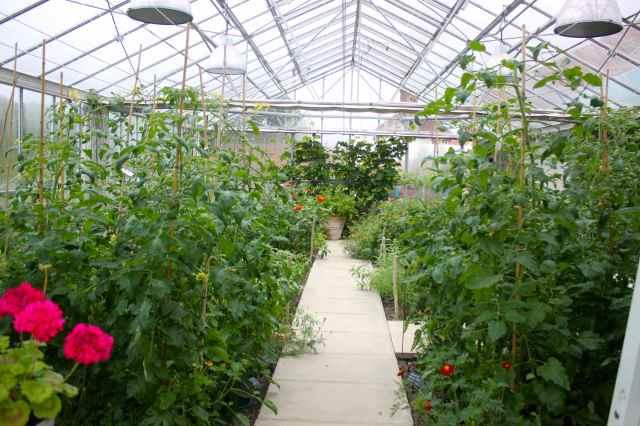 SR's greenhouse
