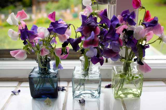 sweet peas in ink pots