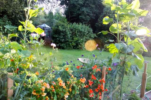 the garden 15-7
