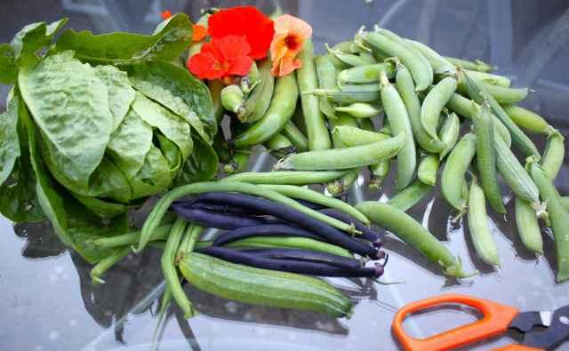 veg from garden 15-7-14