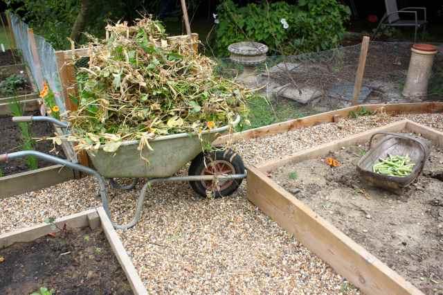 wheelbarrow full of peas