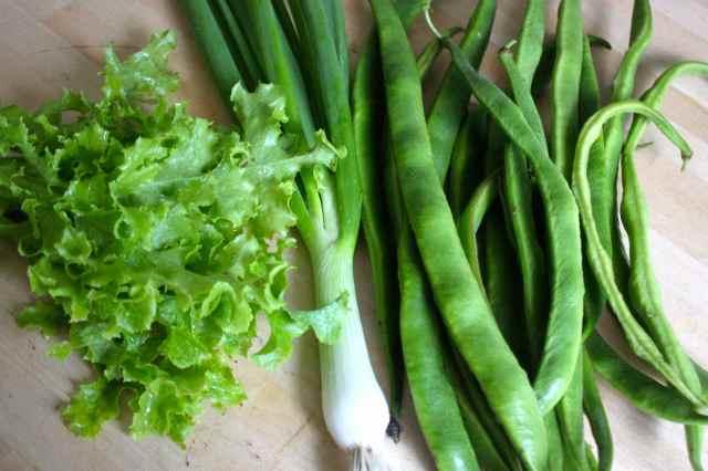 lettuce, spring onion and runner beans