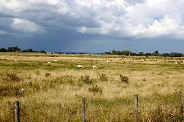 Rye landscape