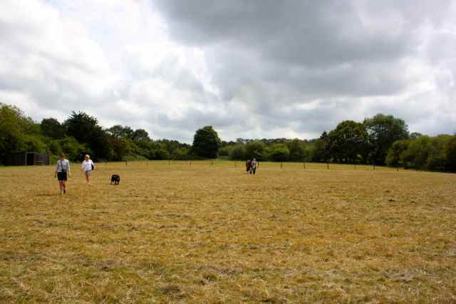 Sally's field