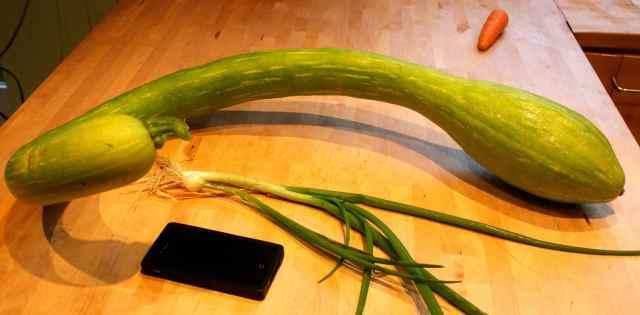 Trombetti and spr onion