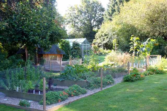 veggie patch August 2014