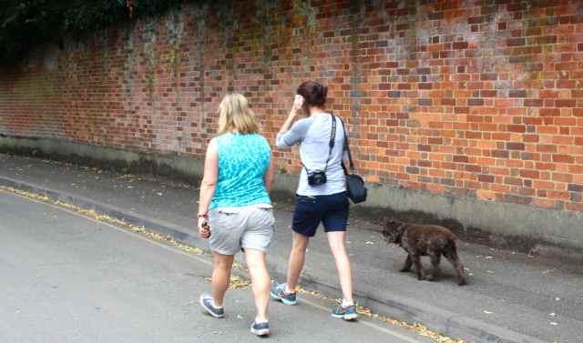 walk in Epsom