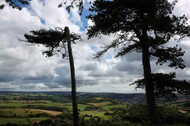 windwswept trees