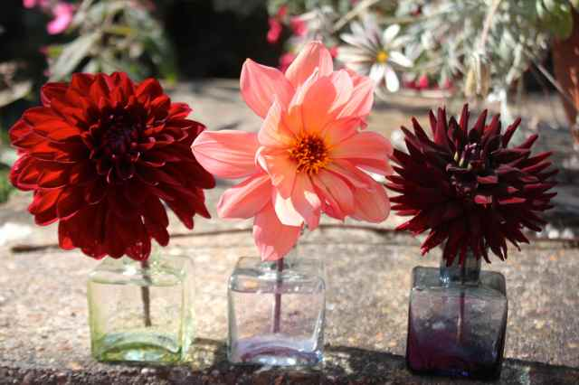 3 dahlias in ink pots