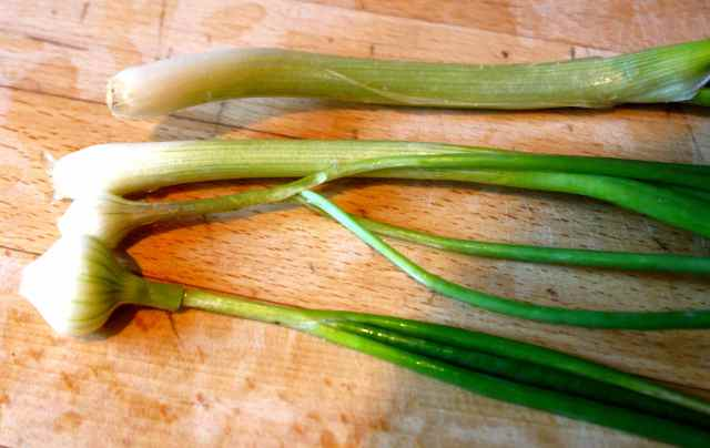 4 spring onions