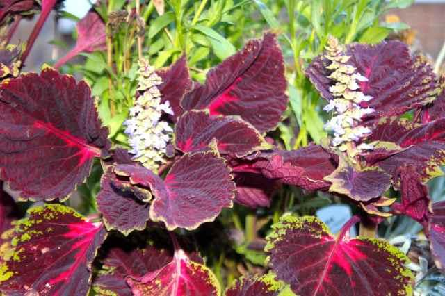 garden plants 1