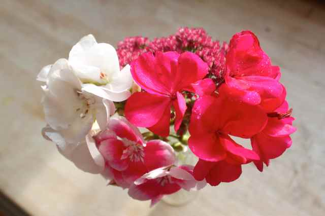 Harvey's flowers