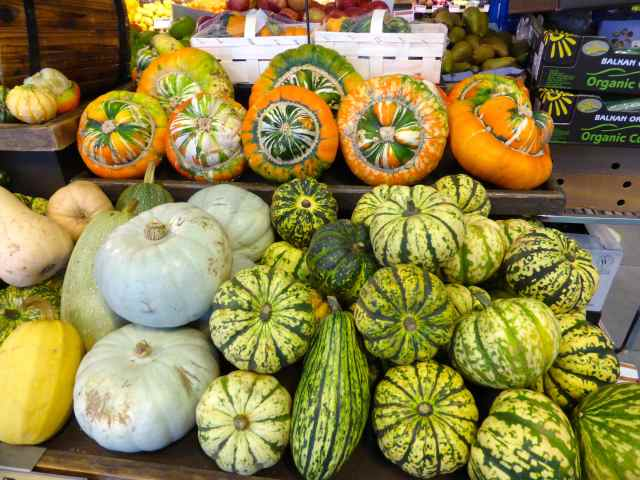 pumpkins in WF
