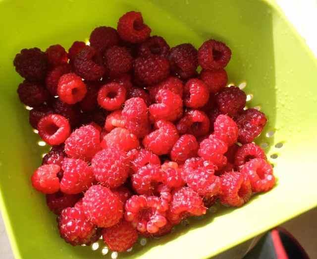 raspberries 28-9