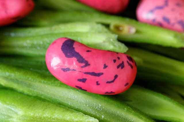 runner bean mottled