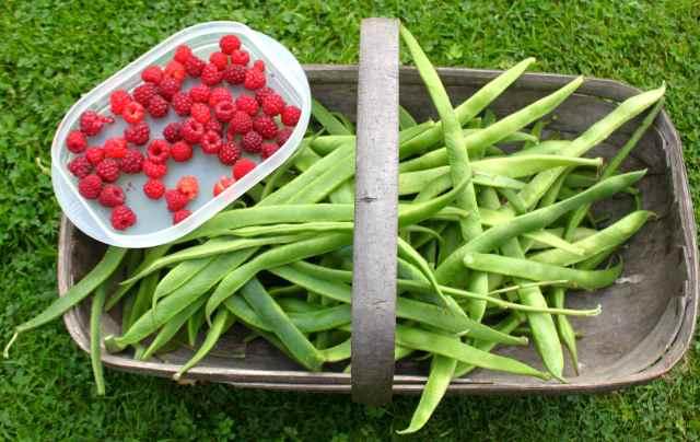 runner beans and raspberries