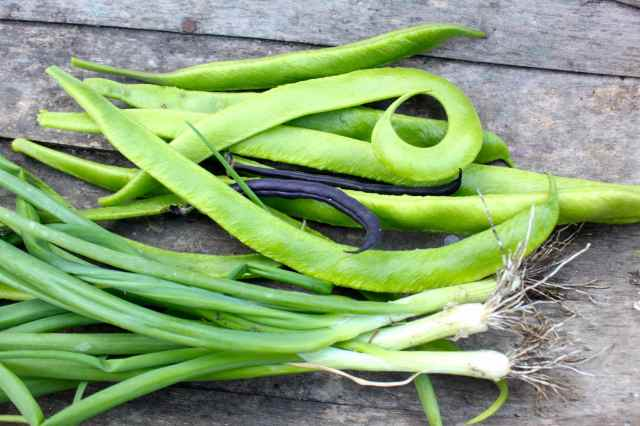 runner beans and spring onions