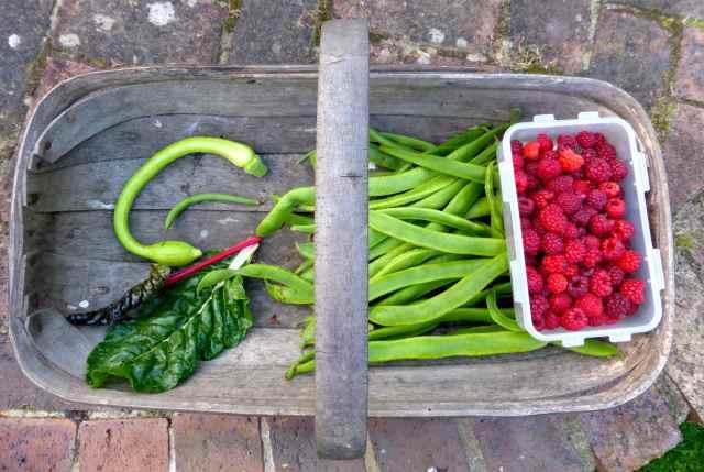 veg from garden 21-9