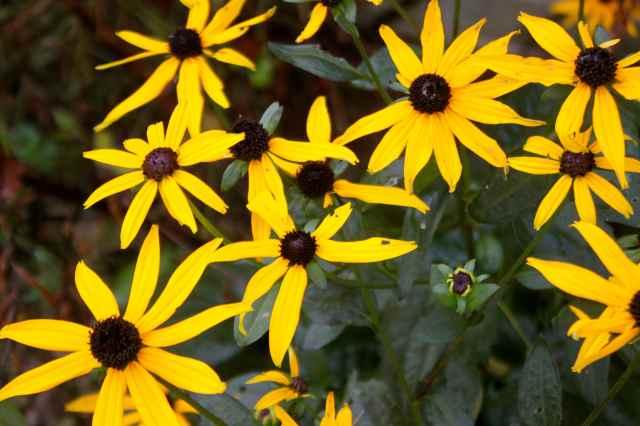 yellow flowers 28-9