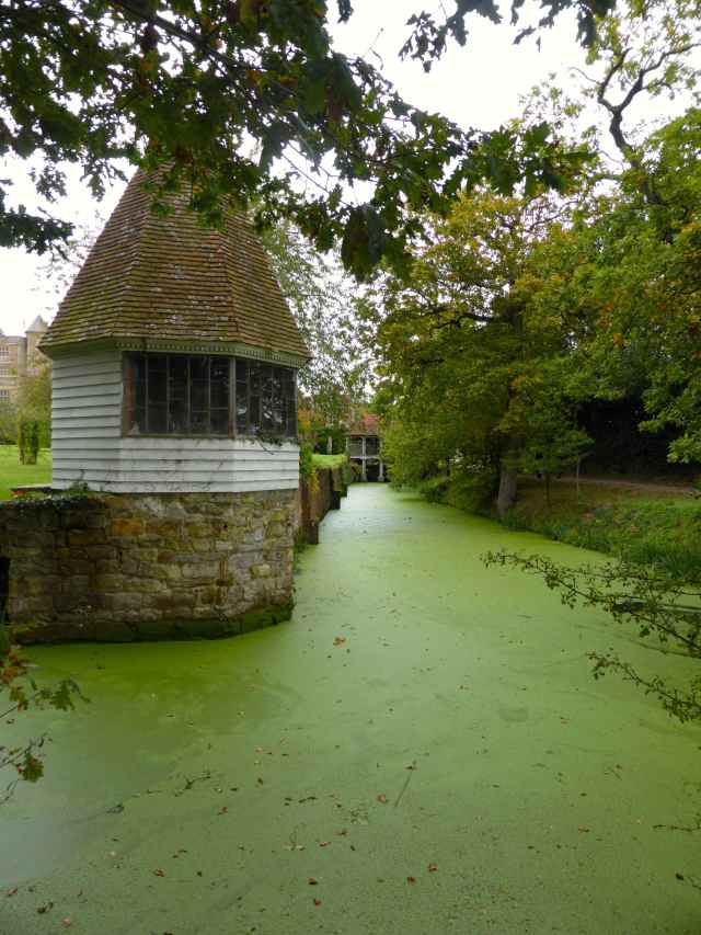 algae at Sissinghurst