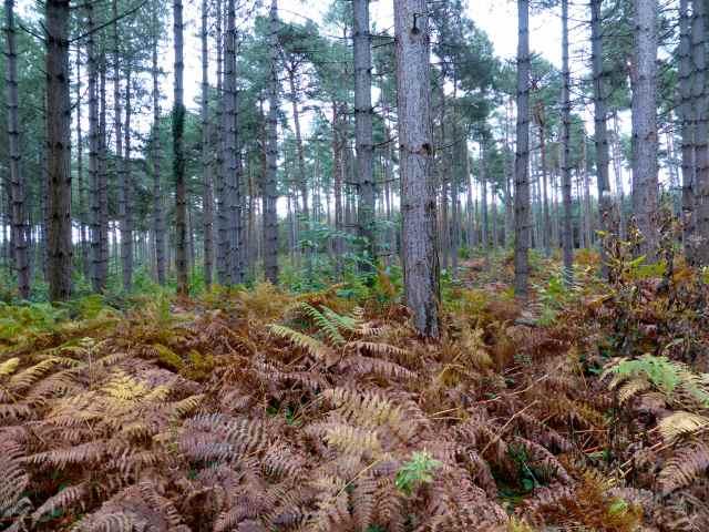 autumn Hemstead