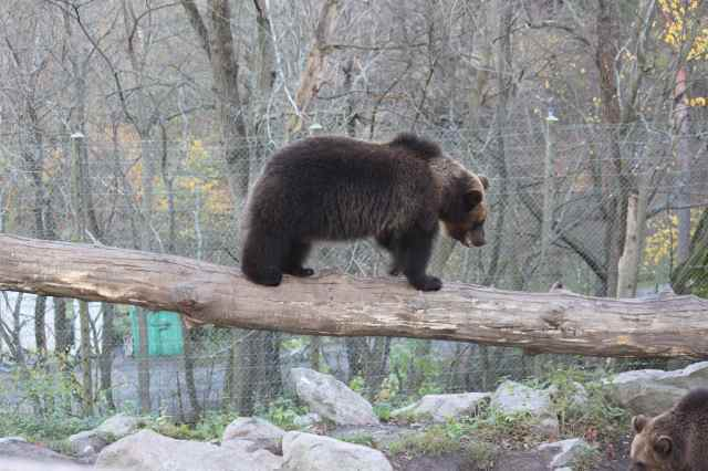 Bjorn on log