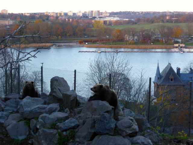 brown bears and Stockholm