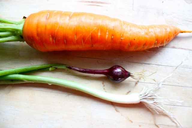 carrot and spring onions