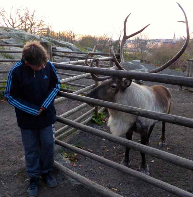 Harvey with reindeer