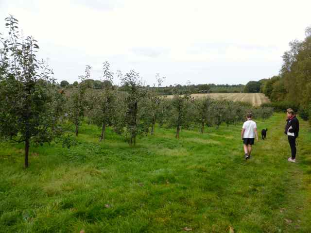 L and H at apple orchard