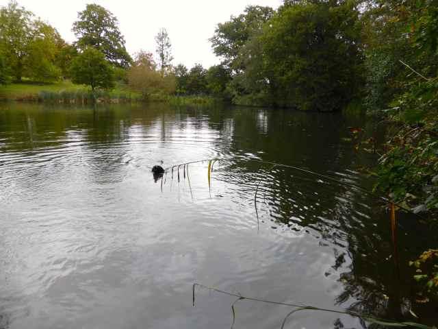 Milton at lake 2