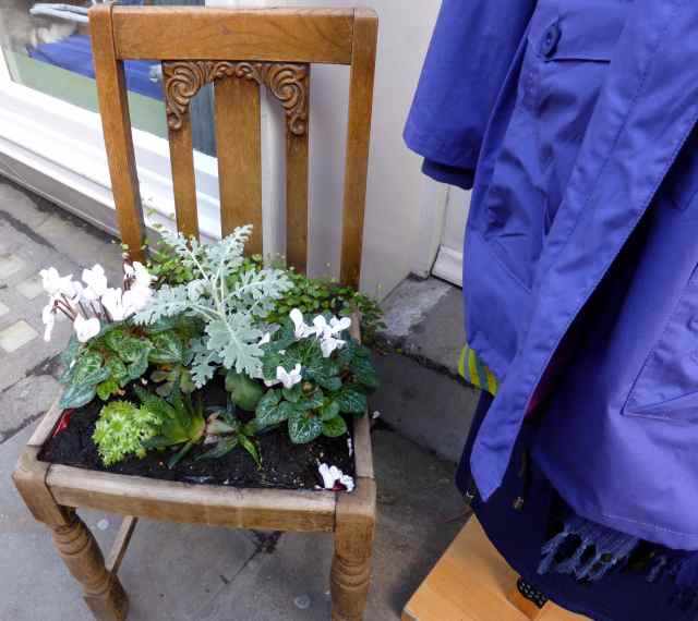 plants in a chair