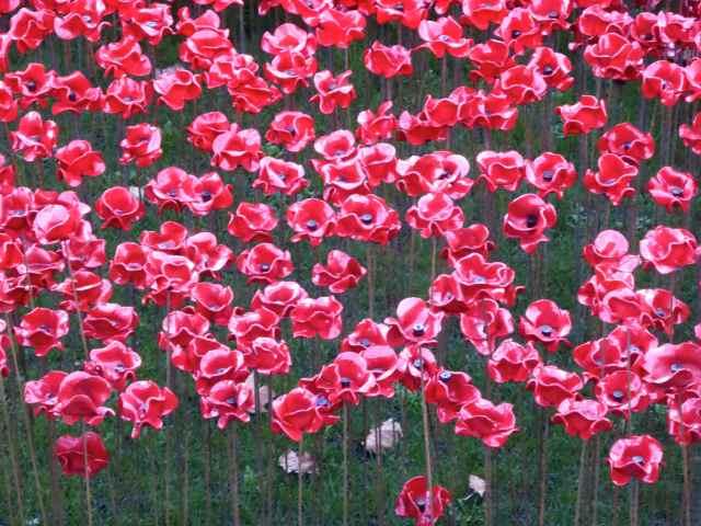 poppies 10